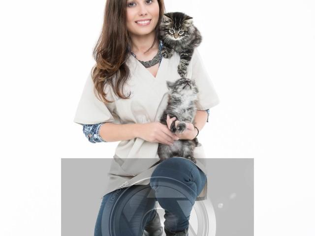 Les chatons gris